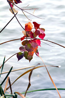Bundled Leaves and Reeds